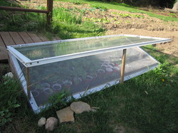 Cold-Frame-1.JPG
